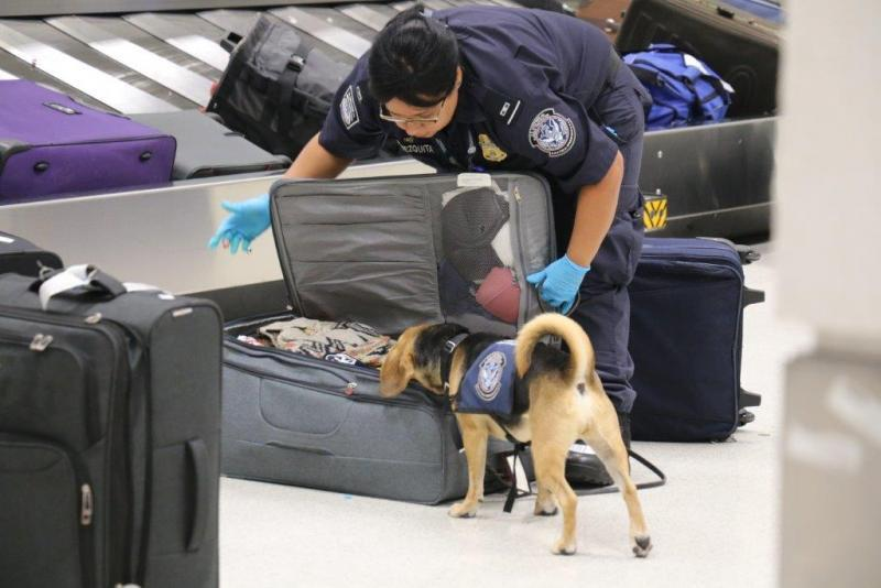 CBP's detector dogs are a key tool for screening passengers in Miami and across the country.