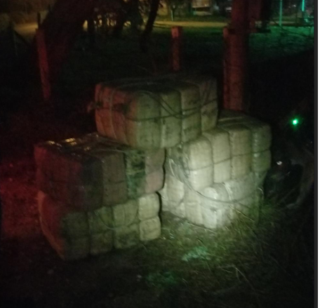 One of several siezures that netted 1500 pounds of marijuana