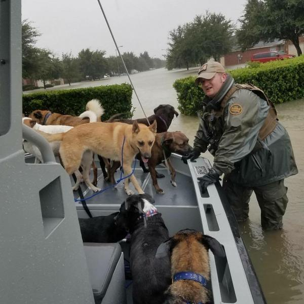 USBP agents continue to rescue all inhabitants in the Houston area