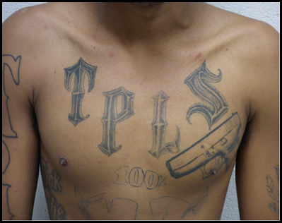 chest of MS-13 gang member displaying gang tattoos